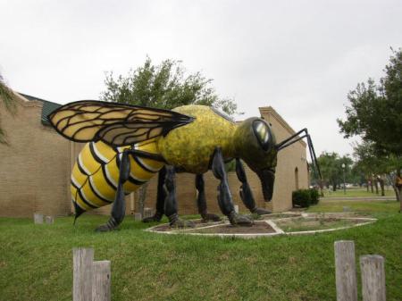 hidalgogiantkillerbee1