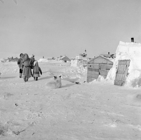 Resolute Bay 1954