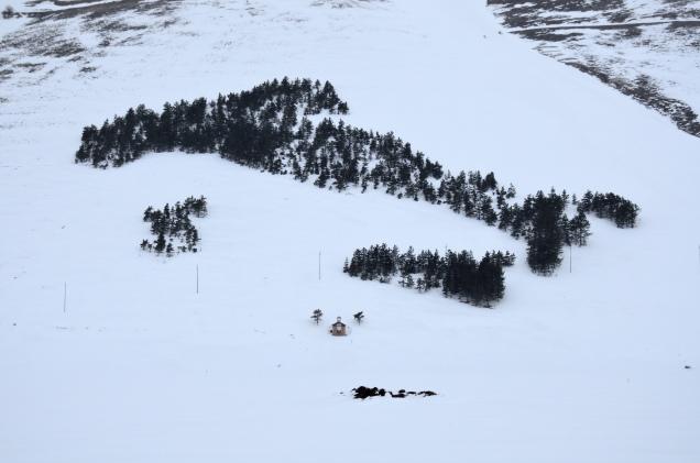 boscoitalia4-nieve